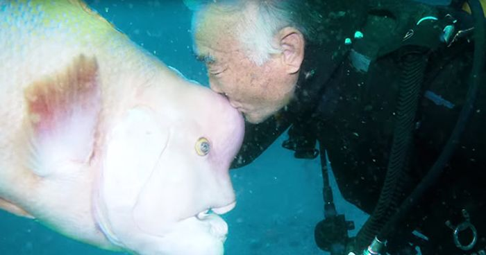 This Japanese Diver Has Been Visiting His Best Friend Fish For 25 Years Now