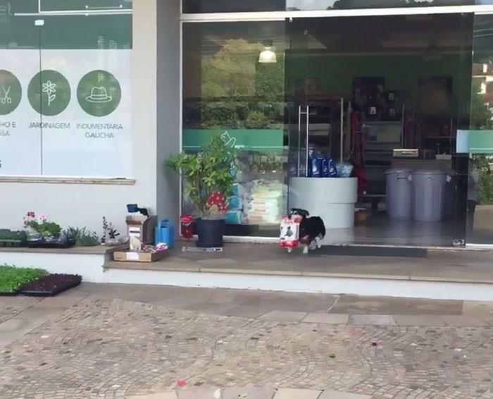 dog-buys-food-himself-pituco-brazil-1