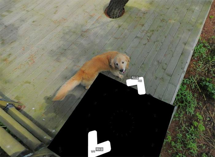 Dog Follows Street View Photographer, Photobombs Each And Every Photo