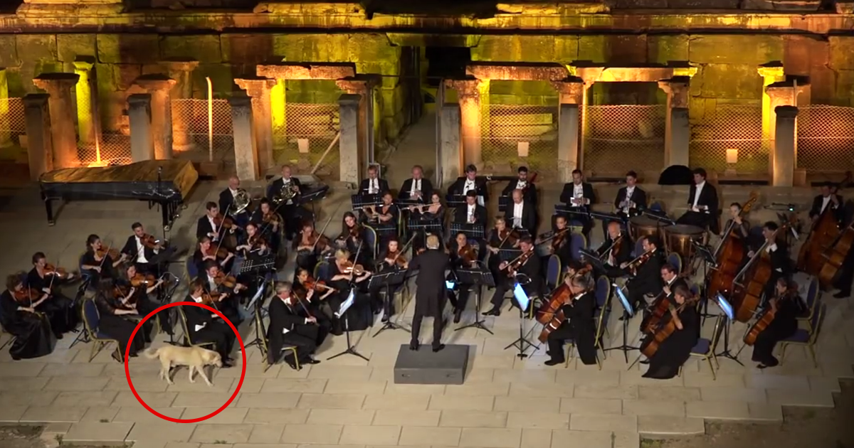 Dog interrupts orchestra performance in cutest way ever for Chambre orchestra