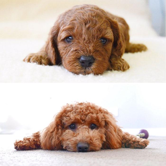 My Little Puppy Has Grown So Much