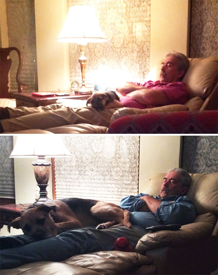 My Dad And My Dog They Have Done This Every Night Since We Have Gotten Her When She Was 10 Weeks Old