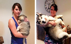 10+ Adorable Before & After Pics Of Dogs Growing Up (Add Yours!)