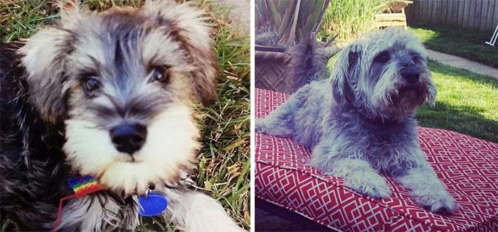 Jack. 9 Weeks & 5 Years Old