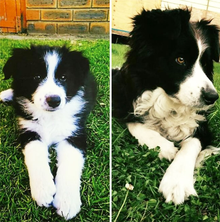 Jersey, 2 Months And On Her 7th Birthday