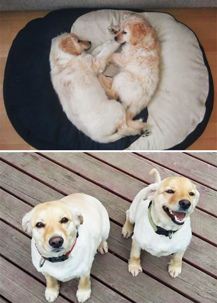Sally & Sheesha At 2 Months Vs At 3 Years. Our Hapiness From A Shelter