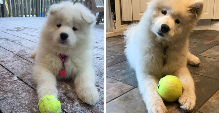 Mochi At 2 And 6 Months