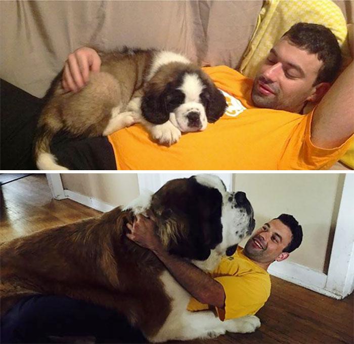 Once A Lap Dog, Always A Lap Dog