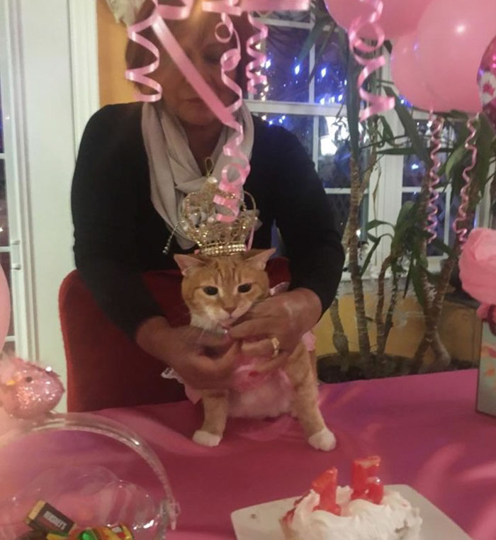 family-throws-cat-quinceanera-party-luna-11
