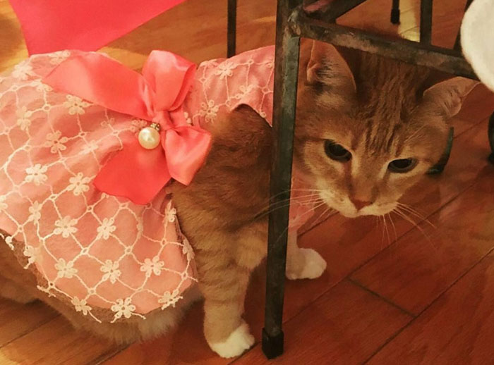 family-throws-cat-quinceanera-party-luna-4