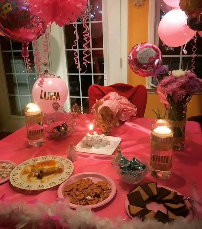 family-throws-cat-quinceanera-party-luna-7