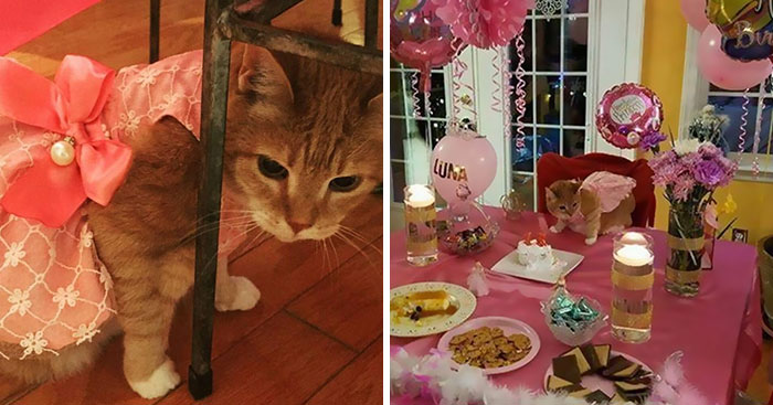 This Family Just Threw A Quinceañera Party For Their 15-Year-Old Cat To Celebrate Her Birthday