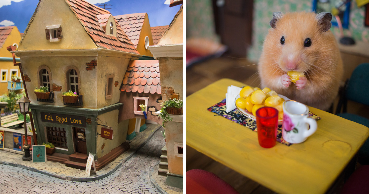 It Took Us 1984 Hours To Create This Miniature Town For Hamsters