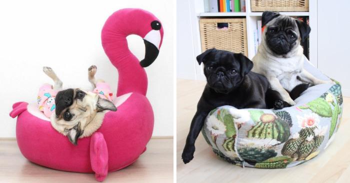 Phenomenal These Pugs Have The Hardest Job Bored Panda Machost Co Dining Chair Design Ideas Machostcouk