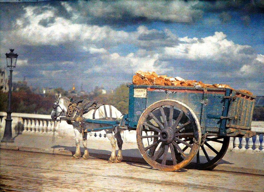 Horse, Paris, 1914