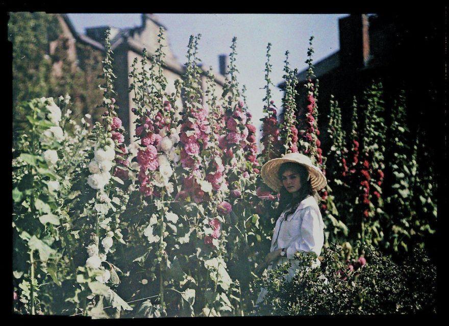 Girl In A Garden With Hollyhocks, 1908