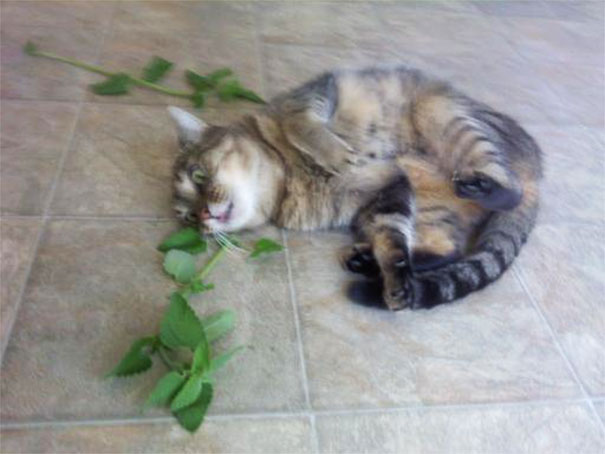 There Was Fresh Catnip At The Farmer's Market Last Week