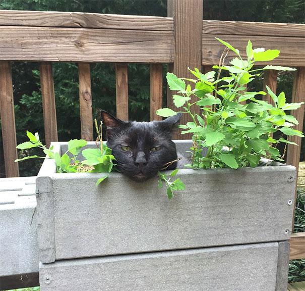 Forgot I Had Catnip Growing