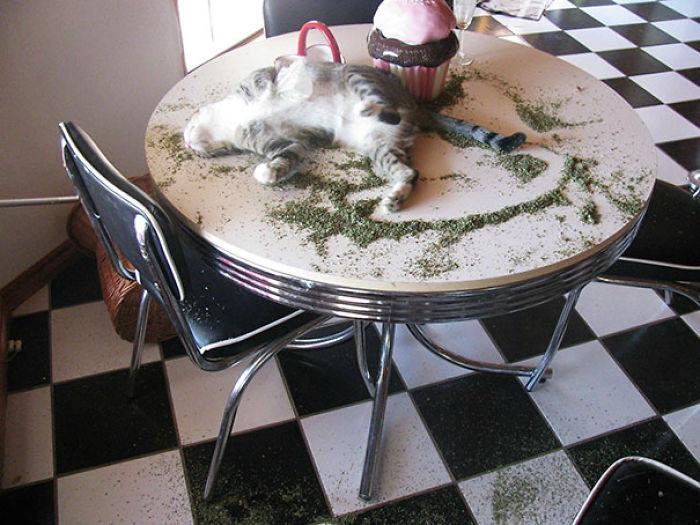 Un poco de hierba, un poco de siesta