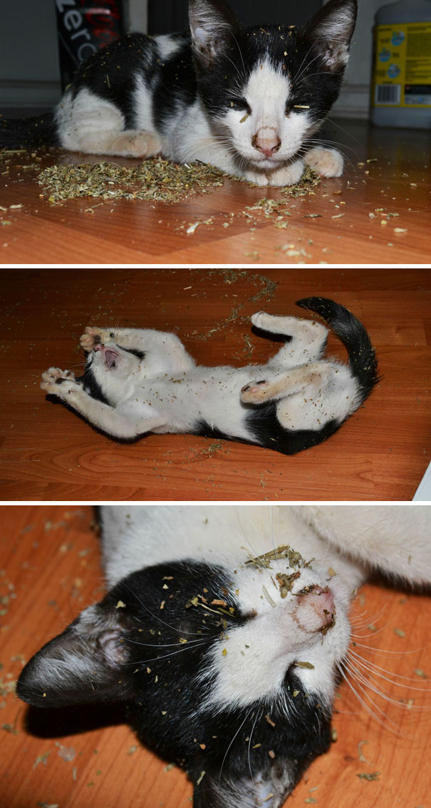 While We Were Out, My Cat Wesley Found The Catnip Bag, Ripped It Open, And This Is What We Returned To