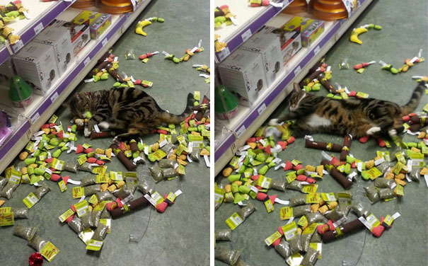 Catnip Is One Hell Of A Drug
