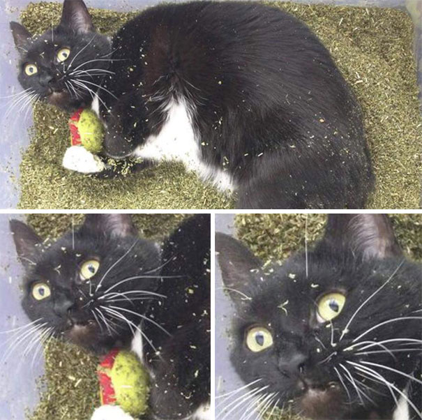 The Cat That Found The Stash