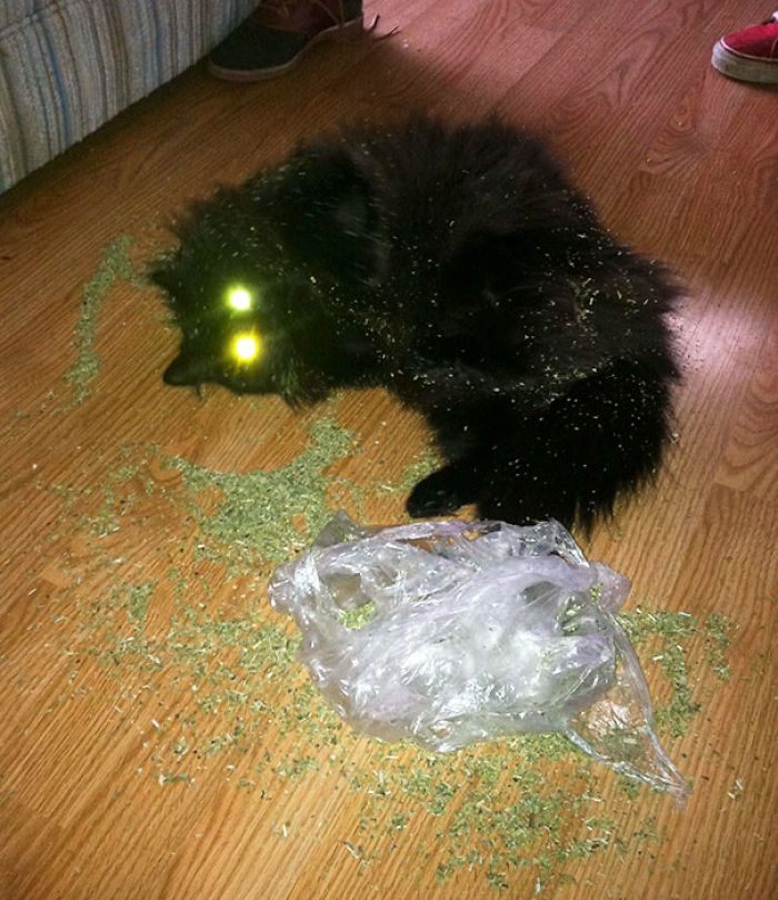 Mira quien encontró la hierba gatera cuando no estaba en casa