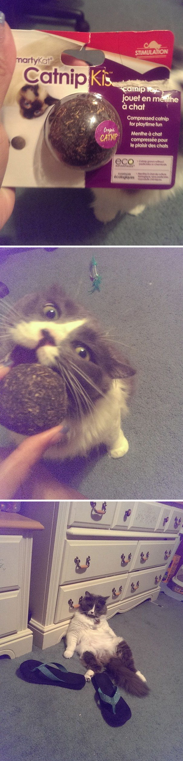 My Sister Decided To Give Her Cat Some Catnip