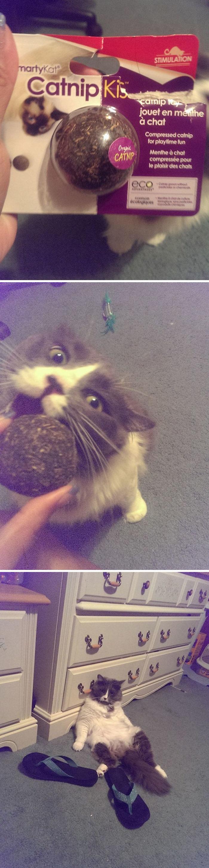 Mi hermana decidió dar un poco de la hierba gatera a su gato