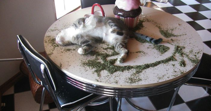 Times Cats Found Catnip And Cat Exe Stopped Functioning