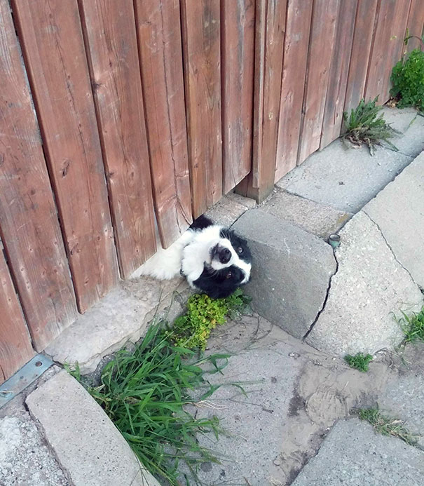 This Is How My Neighbours Dog Gets Attention