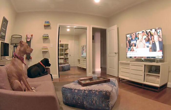 Mi compañero vigila a sus perros por webcam y se dio cuenta de que se dejó la tele puesta