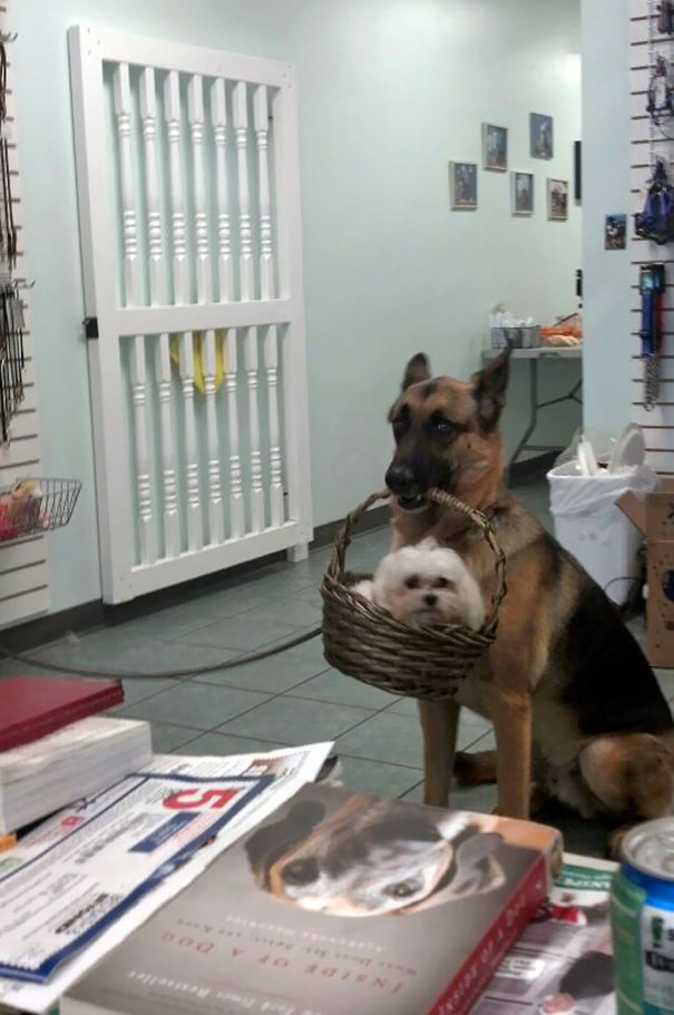 My Friend Works At A Dog Grooming Spa, She Turned Around And Saw This Happening