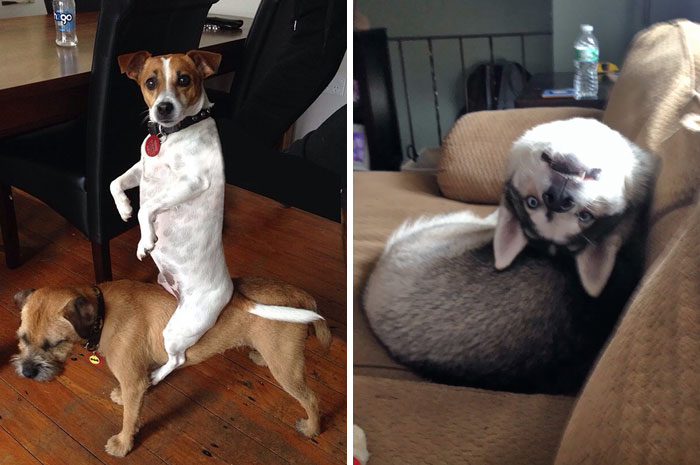 334 Hilarious Pics Of Dogs Acting Weird (Add Yours!)