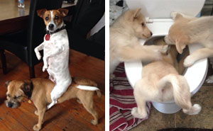 10+ Hilarious Pics Of Dogs Acting Weird (Add Yours!)