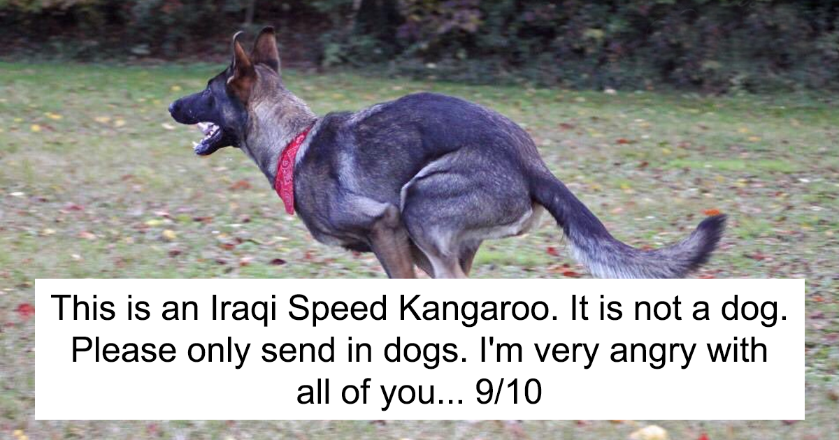 10 Times People Failed To Send Dog Pics We Rate Dogs Twitter