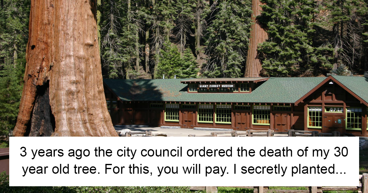 City Council Kills This Man's 30 Year-Old Tree, And His Revenge Will Make Them Deeply Regret It