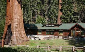 El ayuntamiento mató el árbol de 30 años de este hombre, y su venganza les hará lamentarlo mucho