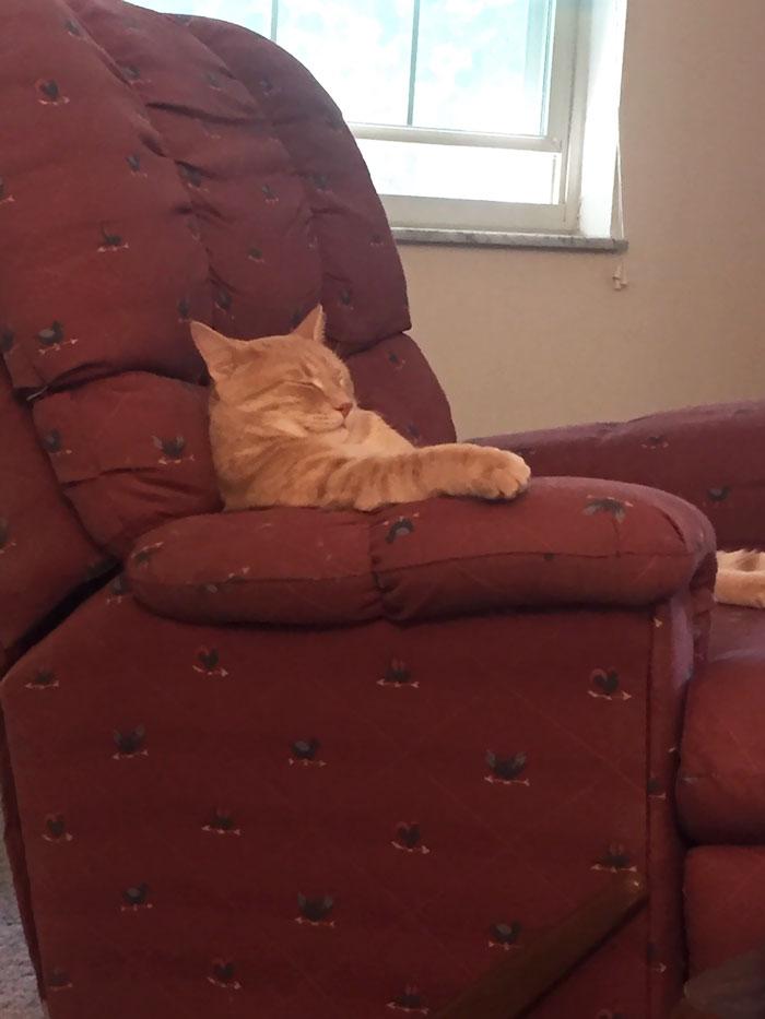 Mi nuevo gato es como el tío raro que se duerme después de comer en Acción de Gracias