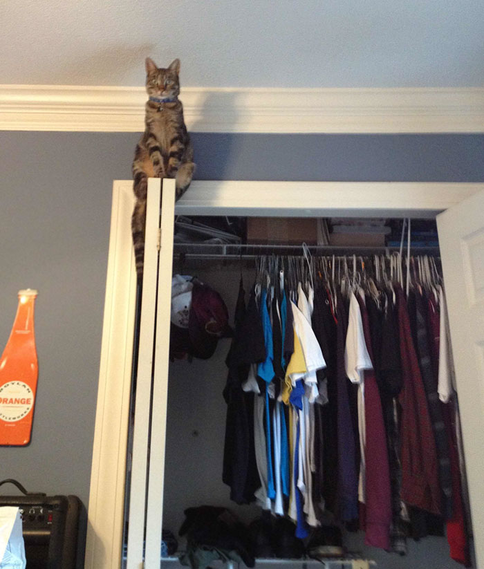 cat sitting way up