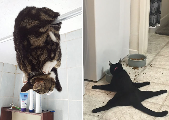 People Are Sharing Pics Of Their Cats Acting Weird (Add Yours)