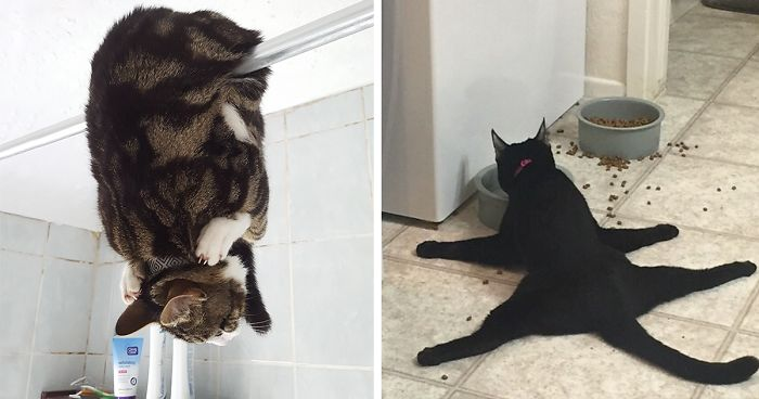 People Are Sharing Pics Of Their Cats Acting Weird Add Yours - 25 cats getting awkward situations