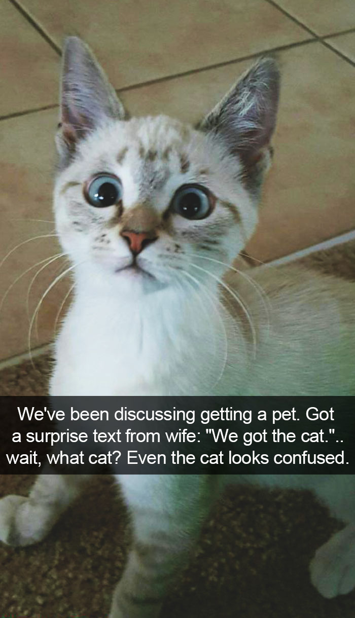 Hilarious Cat Snapchats 2017
