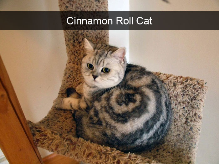Hilarious Cat Snapchats That Are Impawsible Not To Laugh At - 16 funniest cat tweets 2016