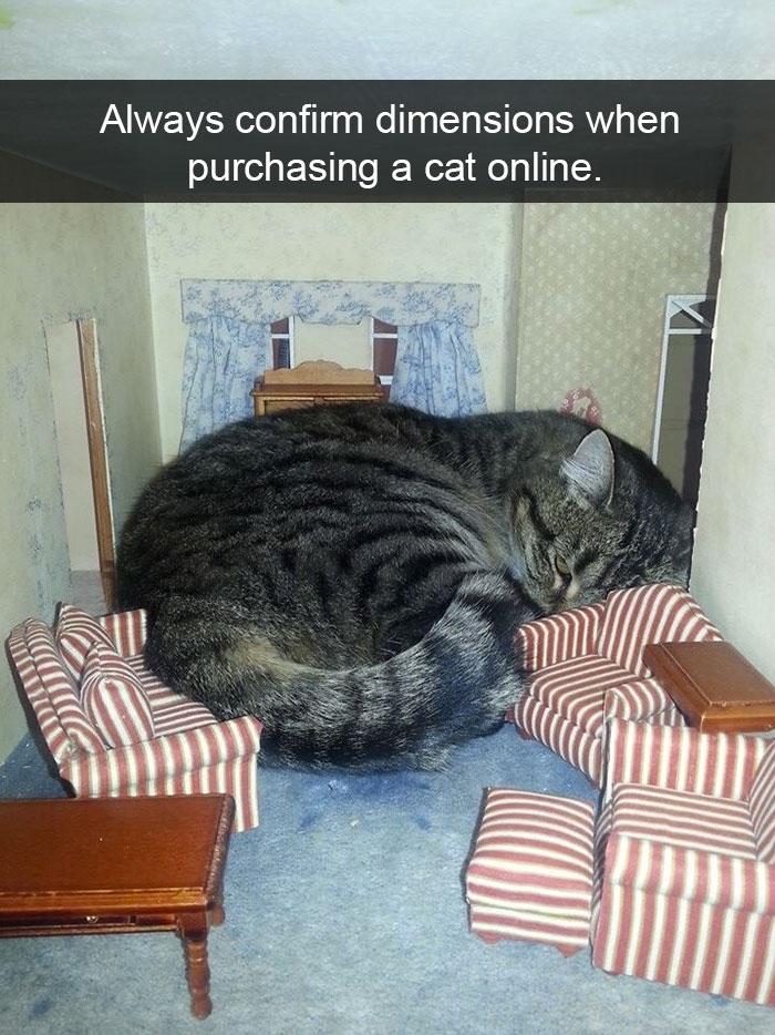 Cat Snapchat