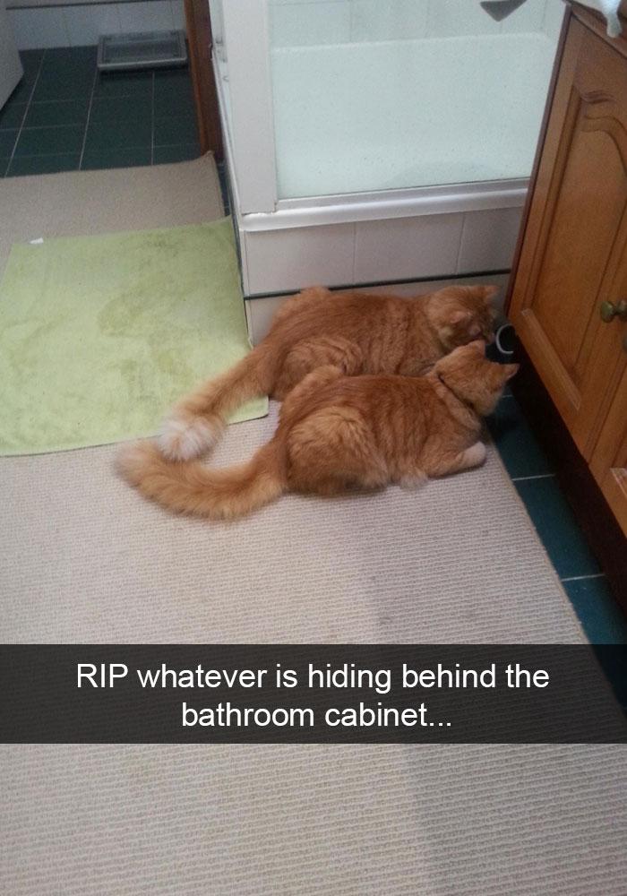 Hilarious-cat-snapchats