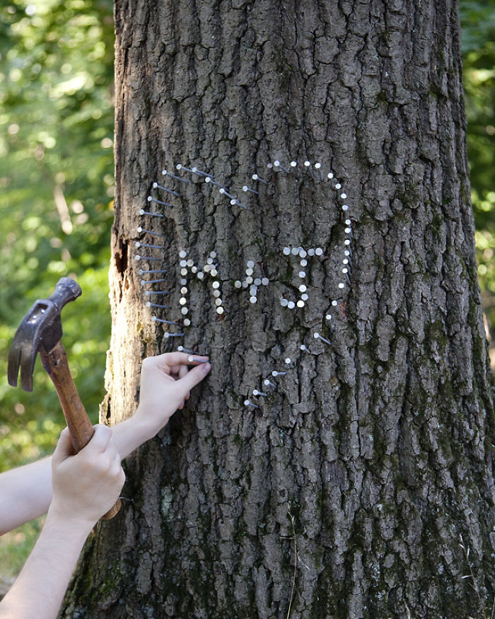 In Maryland Hammering A Nail Into A Tree Is Punishable By A Fifty Dollar Fine