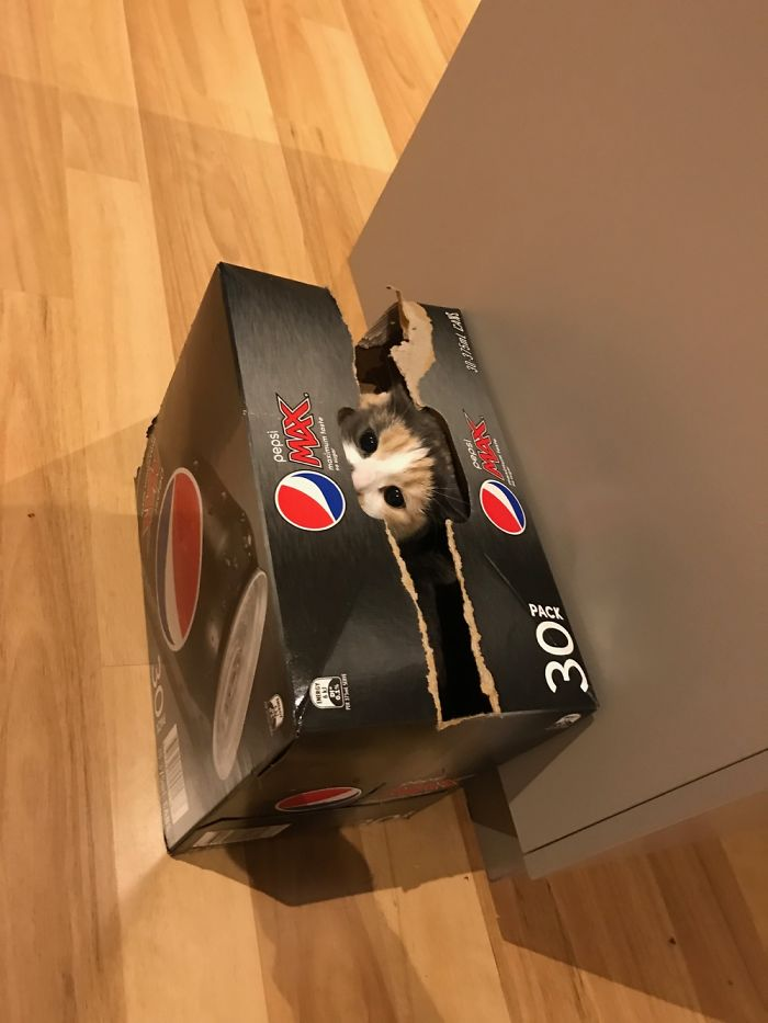 Ella piensa que no podemos verla cuando está en la caja mágica.