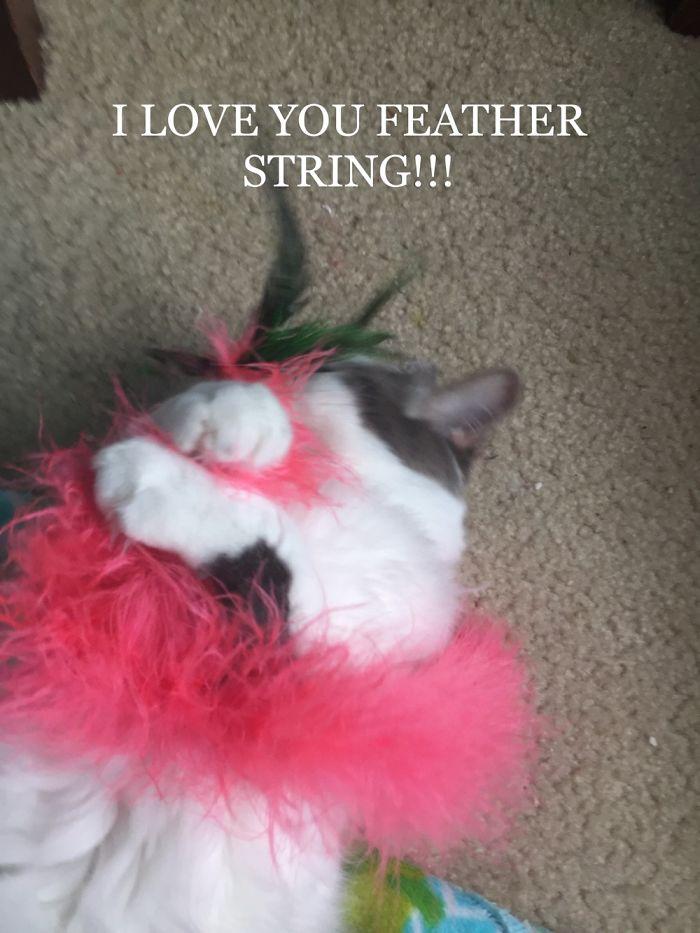 Mi gato abraza a su Juguetes En lugar de rasgar aparte