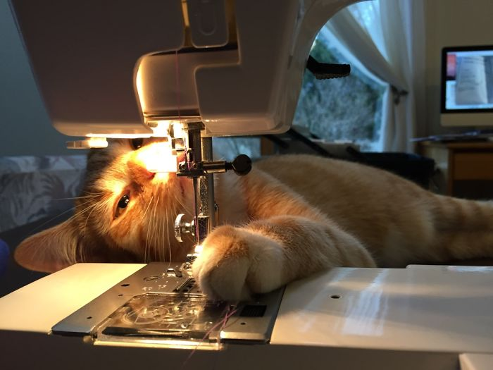 Hamilton Loves Sewing!